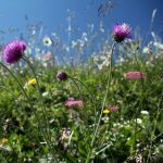 Photo of flowers on the Dent de Brenleire, Fribourg, hiking in Switzerland